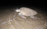 our_turtle_2009_50